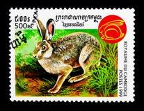 Οικογένεια Leporidae, έτος κουνελιών του κουνελιού serie, circa 1999 Στοκ Εικόνες