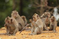 οικογένεια macaque Στοκ Εικόνα
