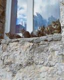 οικογενειακά γατάκια δύο γατών γατών Στοκ φωτογραφίες με δικαίωμα ελεύθερης χρήσης