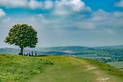 Οικογενειακή προστασία κάτω από τη σκιά ενός δέντρου στοκ εικόνα με δικαίωμα ελεύθερης χρήσης