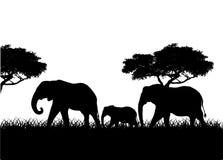 Οικογενειακή σκιαγραφία ελεφάντων Στοκ φωτογραφίες με δικαίωμα ελεύθερης χρήσης