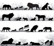 Οικογενειακή σκιαγραφία λιονταριών ` s Στοκ Εικόνα