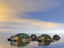 οικογενειακή χελώνα Στοκ Φωτογραφίες