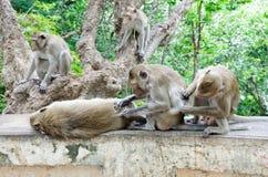 οικογενειακός πίθηκος Στοκ Φωτογραφίες