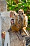 οικογενειακός πίθηκο&sigmaf Στοκ φωτογραφίες με δικαίωμα ελεύθερης χρήσης