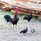 Οικογενειακό κοτόπουλο στη φύση Στοκ Φωτογραφία