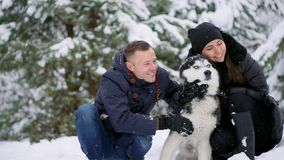 Οικογενειακό πορτρέτο του χαριτωμένου ευτυχούς ζεύγους που αγκαλιάζει με το από την Αλάσκα σκυλί malamute τους που γλείφει το ανθ απόθεμα βίντεο