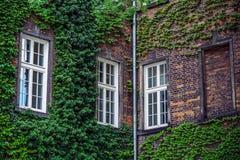 Οικοδόμηση με πολλά παράθυρα και τον αμπελώνα Στοκ εικόνα με δικαίωμα ελεύθερης χρήσης