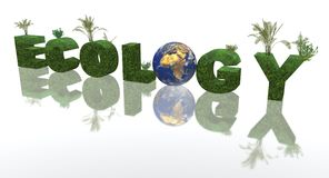 οικολογία Στοκ Εικόνες