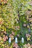 οικολογικός πράσινος παλαιός τοίχος ανασκόπησης Στοκ φωτογραφία με δικαίωμα ελεύθερης χρήσης
