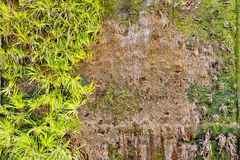 οικολογικός πράσινος παλαιός τοίχος ανασκόπησης Στοκ εικόνα με δικαίωμα ελεύθερης χρήσης