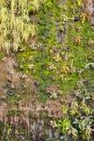 οικολογικός πράσινος παλαιός τοίχος ανασκόπησης Στοκ Φωτογραφία