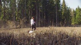 Οικολόγος στο δάσος που καταρρίπτει μετρώντας τα μικρά δέντρα απόθεμα βίντεο