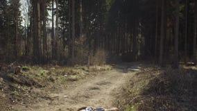 Οικολόγος στο δάσος που καταρρίπτει το γράψιμο στο σημειωματάριο απόθεμα βίντεο