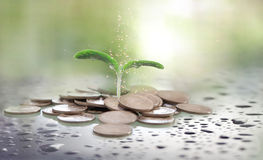 οικονομικός προγραμματισμός ποντικιών γραφικών παραστάσεων δολαρίων τραπεζογραμματίων Στοκ Εικόνα