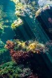 Οικοσύστημα σκοπέλων με το anemone και τις εγκαταστάσεις Στοκ φωτογραφία με δικαίωμα ελεύθερης χρήσης