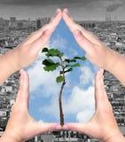 Οικολογική έννοια Στοκ φωτογραφίες με δικαίωμα ελεύθερης χρήσης