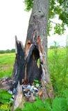 οικολογική περιβαλλοντική ρύπανση φωτογραφιών κρίσης Σκουπίδια μέσα στο δέντρο Στοκ Εικόνα