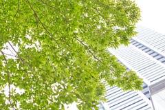 Οικοδόμηση, πράσινη στοκ εικόνες με δικαίωμα ελεύθερης χρήσης
