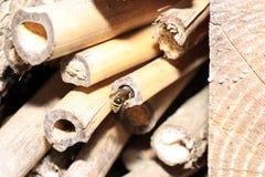 Οι άγριες μέλισσες είναι όλα τα είδη μελισσών Στοκ εικόνα με δικαίωμα ελεύθερης χρήσης