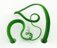 Οι άμπελοι εγκαταστάσεων πράσινες, δύο που προκύπτουν συναντιούνται ελεύθερη απεικόνιση δικαιώματος