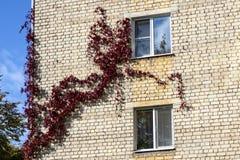 Οι άνεμοι δέντρων κατά μήκος του τοίχου του σπιτιού στοκ φωτογραφία με δικαίωμα ελεύθερης χρήσης