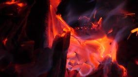 Οι άνθρακες του ξύλου είναι κόκκινο πυράκτωσης με την πυρκαγιά Πυρκαγιές στα δάση E απόθεμα βίντεο