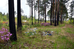 Οι άνθρωποι έριξαν τα σκουπίδια στο δάσος που άλλοι άνθρωποι χτίζουν τα σπίτια για τους Στοκ Φωτογραφίες