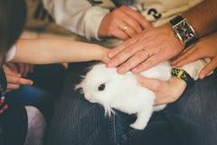 Οι άνθρωποι αγγίζουν το άσπρο κουνέλι κατοικίδιων ζώων στοκ εικόνα με δικαίωμα ελεύθερης χρήσης