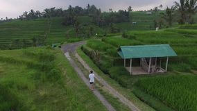 Οι άνθρωποι είναι στους τομείς ρυζιού στο ινδονησιακό χωριό του Μπαλί απόθεμα βίντεο