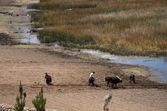 Οι άνθρωποι εργάζονται σκληρά με το άροτρο στον τομέα στη Βολιβία Στοκ φωτογραφίες με δικαίωμα ελεύθερης χρήσης