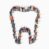 Οι άνθρωποι διαμορφώνουν το δόντι οδοντικό Στοκ Εικόνες