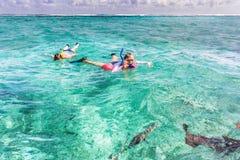Οι άνθρωποι κολυμπούν με αναπνευτήρα στο σκόπελο κοντά στον καλαφάτη Caye στη Μπελίζ Στοκ εικόνες με δικαίωμα ελεύθερης χρήσης
