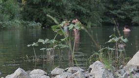 Οι άνθρωποι λούζουν στον ποταμό φιλμ μικρού μήκους