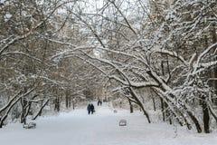 Οι άνθρωποι περπατούν στη χιονισμένη αλέα χειμερινών πάρκων στοκ εικόνα