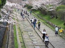 Οι άνθρωποι που περπατούν κατά μήκος των διαδρομών ενός μη χρησιμοποιούμενου σιδηροδρόμου κάτω από το όμορφο κεράσι ανθίζουν δέντ Στοκ Εικόνες