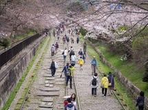 Οι άνθρωποι που περπατούν κατά μήκος των διαδρομών ενός μη χρησιμοποιούμενου σιδηροδρόμου κάτω από το όμορφο κεράσι ανθίζουν δέντ Στοκ Εικόνα