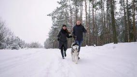 Οι άνθρωποι σε έναν περίπατο στο δασικό άτομο Α και ένα σιβηρικό γεροδεμένο σκυλί τραβούν ένα έλκηθρο με ένα παιδί στο χιόνι απόθεμα βίντεο