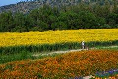 Οι άνθρωποι στέκονται τα κίτρινα λουλούδια ρολογιών Στοκ εικόνα με δικαίωμα ελεύθερης χρήσης