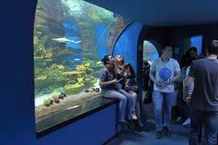 Οι άνθρωποι στο γύρο που επισκέπτεται τα ζώα του Dolphinarium Στοκ Εικόνες