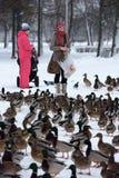 Οι άνθρωποι στο πάρκο ταΐζουν πολλές πάπιες το χειμώνα στοκ φωτογραφίες