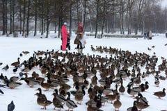 Οι άνθρωποι στο πάρκο ταΐζουν πολλές πάπιες το χειμώνα στοκ φωτογραφία με δικαίωμα ελεύθερης χρήσης