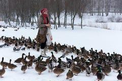 Οι άνθρωποι στο πάρκο ταΐζουν πολλές πάπιες το χειμώνα στοκ εικόνες με δικαίωμα ελεύθερης χρήσης