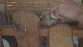 Οι άνθρωποι ταΐζουν την αίγα μωρών στο ζωολογικό κήπο ή το αγρόκτημα απόθεμα βίντεο