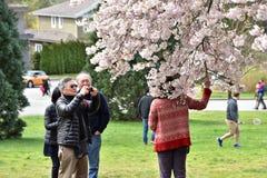 Οι άνθρωποι τραβούν τους blomming κλάδους για τους στοκ εικόνες