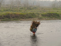 Οι άνθρωποι φέρνουν τη χλόη μετά από το εθνικό πάρκο Νεπάλ Chitwan εποχής χλόης Στοκ φωτογραφία με δικαίωμα ελεύθερης χρήσης
