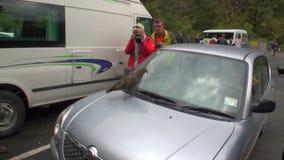 Οι άνθρωποι φωτογραφίζουν το πουλί στη στέγη του αυτοκινήτου στα πράσινα βουνά της Νέας Ζηλανδίας απόθεμα βίντεο