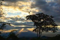 Οι άνοδοι ήλιων που κάνουν το Μαύρο δέντρων στοκ εικόνες