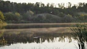 Οι άσπρες άνοδοι ομίχλης πέρα από τον ποταμό στα ξημερώματα, πουλιά πετούν κατά μήκος του ήρεμου νερού φιλμ μικρού μήκους