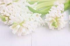 Οι άσπροι υάκινθοι υάκινθων Beautufil τόνισαν το άσπρο υπόβαθρο λουλουδιών οριζόντιο στοκ εικόνα με δικαίωμα ελεύθερης χρήσης
